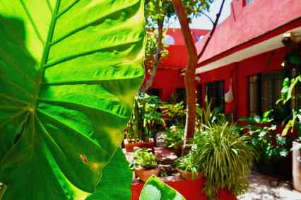 Colours of Oaxaca1