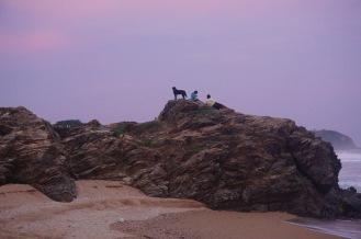 dog sunset1